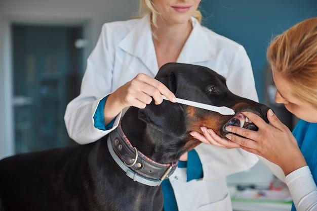 Controllo dei denti dal veterinario