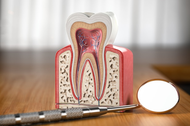 Поперечное сечение модели зуба со стоматологическим зеркалом на деревянном столе. 3d иллюстрации
