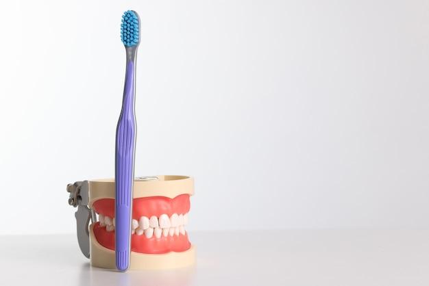 Зубная щетка и искусственная челюсть с белыми зубами на белом фоне. концепция гигиены полости рта