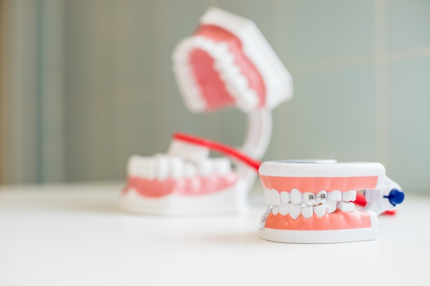 Зубная щетка чистит модель зубов. образцы челюстей модели зубов в стоматологическом кабинете профессиональной стоматологической клиники. стоматологические концепции. копировать пространство