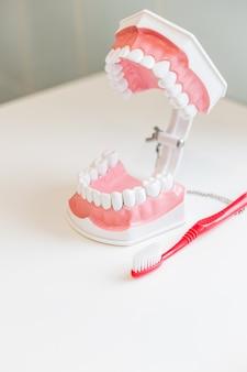 Зубная щетка чистит модель зубов. щею образцы зубов модели в стоматологическом кабинете профессиональной стоматологической клиники. здоровье зубов. копировать пространство