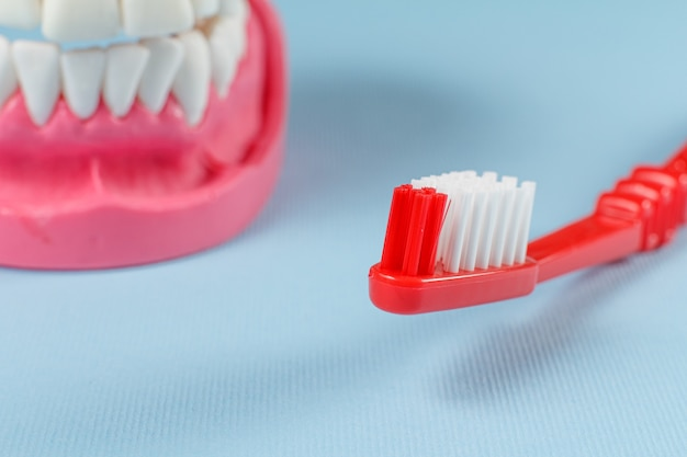 Toothbrush and layout of the human jaw on the background.