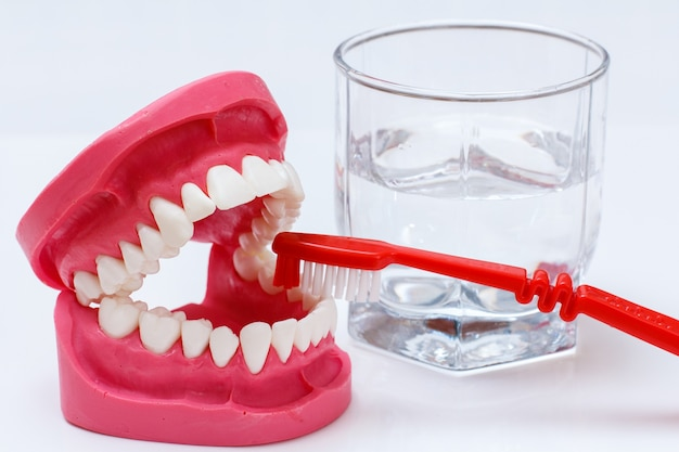 Toothbrush and layout of the human jaw on the white background.