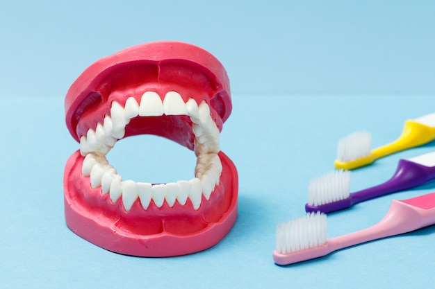 Toothbrushes and layout of the human jaw on the blue background.