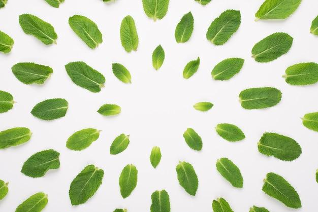 白い背景で隔離の円に横たわっているミントの葉の俯瞰写真の上の上
