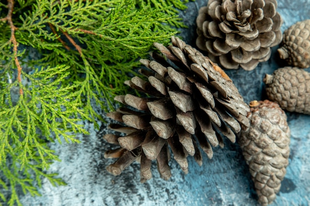 Top close view closed and open pinecones pine branch on grey surface
