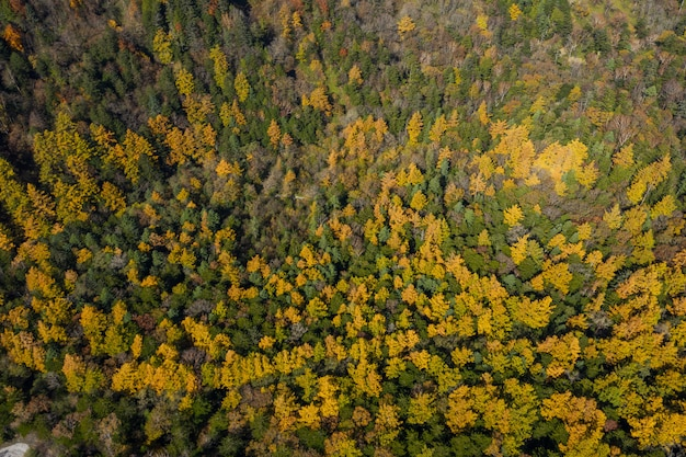 Top down aerial view over autumn forest in kamikochi national park of japan.