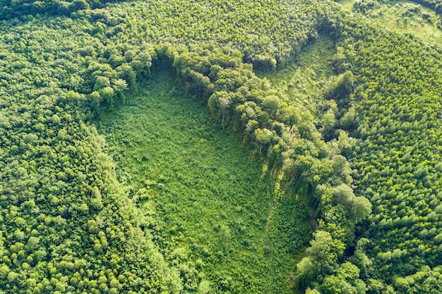 Top down aerial view of green summer forest with large area of cut down trees as result of global deforestation industry. harmful human influence on world ecology.