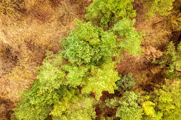 Top down aerial view of green summer forest with many fresh trees.