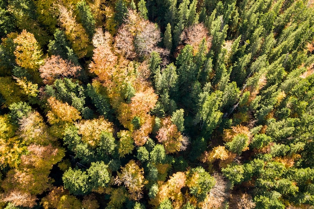 Top down aerial view of green and yellow autumn forest with fresh trees.
