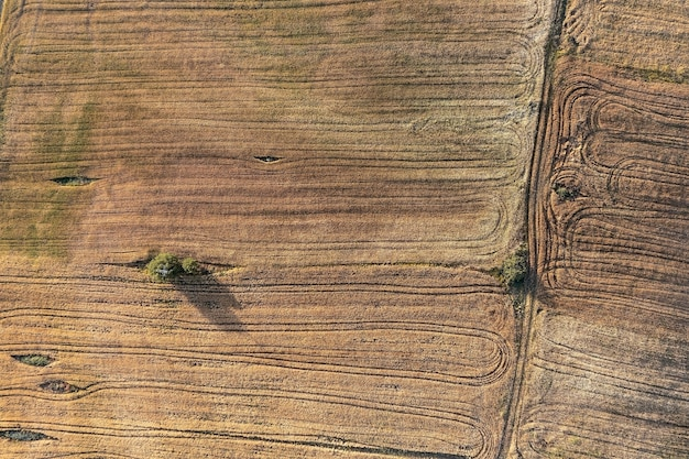 희귀한 나무와 농기계의 흔적이 있는 들판의 하향식 조감도