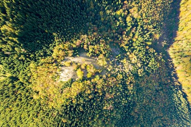 Вид сверху вниз на ярко-зеленые ели и желтые осенние деревья в осеннем лесу.