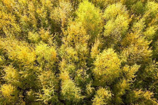 Вид сверху вниз на зеленые и желтые навесы в осеннем лесу с множеством свежих деревьев.