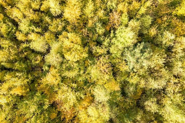多くの新鮮な木がある秋の森の緑と黄色の天蓋のトップダウンの空中写真。
