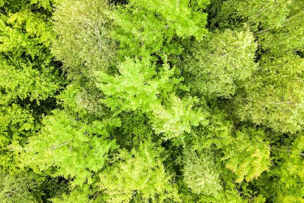 多くの新鮮な木の天蓋がある緑の夏の森の空中写真を上から見下ろします。