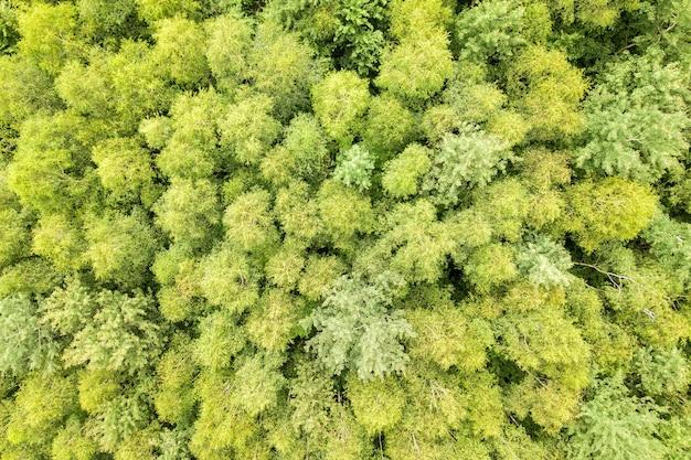 Вид сверху вниз на зеленый летний лес с навесами из множества свежих деревьев.