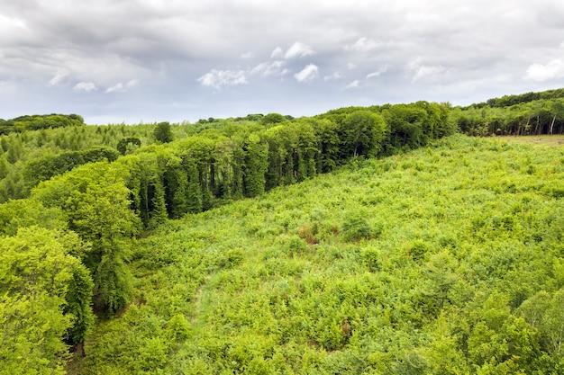 나무가 잘려진 넓은 지역이 있는 녹색 여름 숲의 하향식 공중 전망