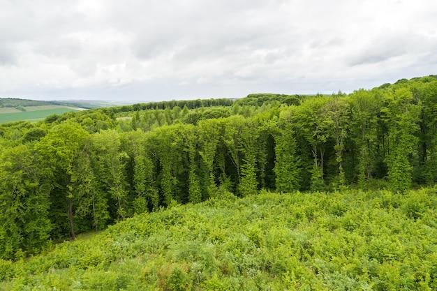 잘려진 나무가 많은 녹색 여름 숲의 하향식 조감도