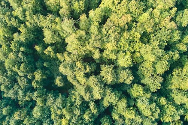 Плоский вид сверху вниз на темный пышный лес с навесами зеленых деревьев летом.