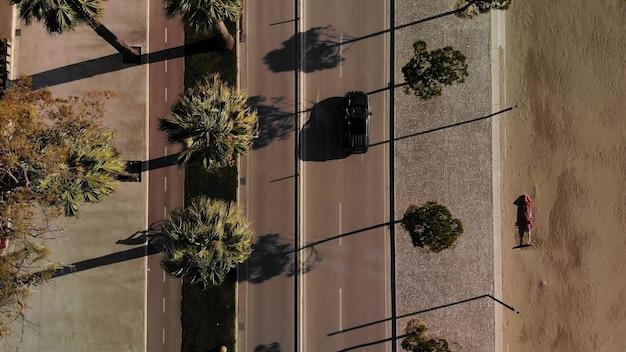 道路とヤシの木のトップダウンビュー