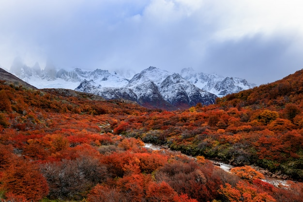 The top of fitzroy mountain hidden in clouds. view on small river and red color forest in patagonia, argentina. andes