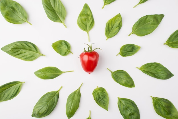 Top above overhead view photo of basil leaves and a cherry tomato in the center isolated on white background