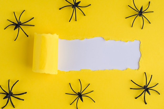 Top above overhead view photo of torn bright yellow paper over white background with decorative spiders
