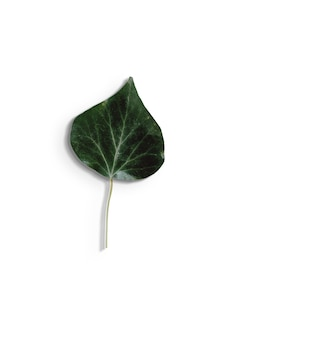 디자인 요소에 대 한 흰색 background.fit에 고립 된 녹색 잎보기를 위로 가기.