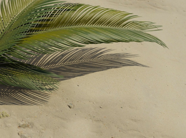 Top view 3d green palm leaves composition