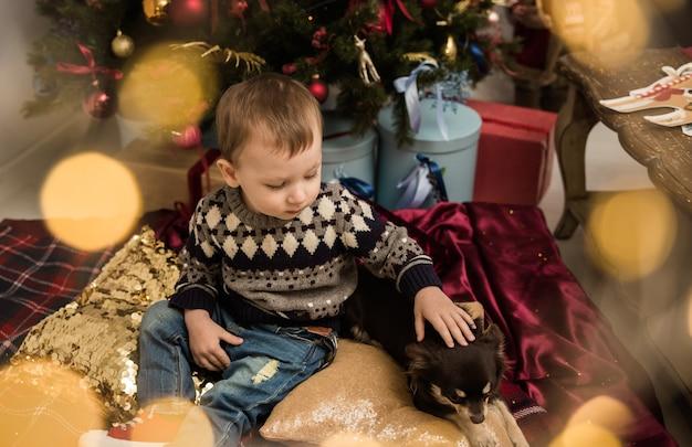 스웨터를 입은 백인 소년이 치와와 개가 있는 방에 있는 크리스마스 트리 근처에 앉아 있다