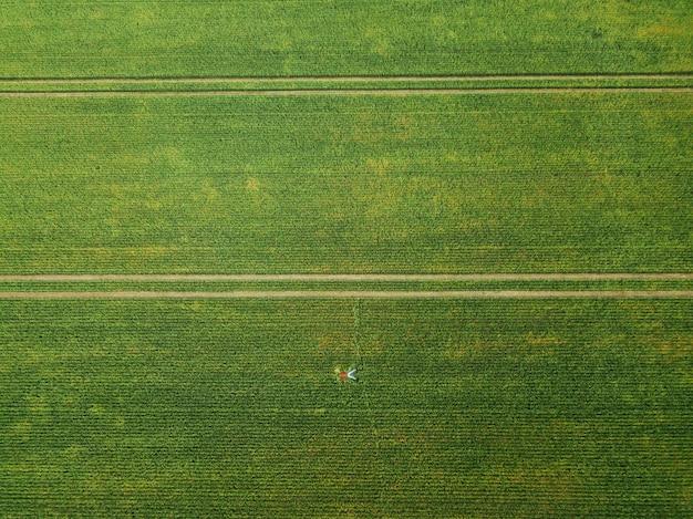 上面図。男は大きな緑の麦畑の中にあります。