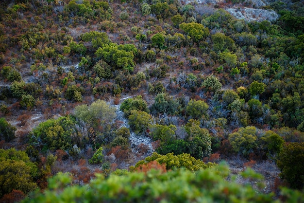 トップビュー、素晴らしい自然の背景。コルシーナ島の美しい植生の色。