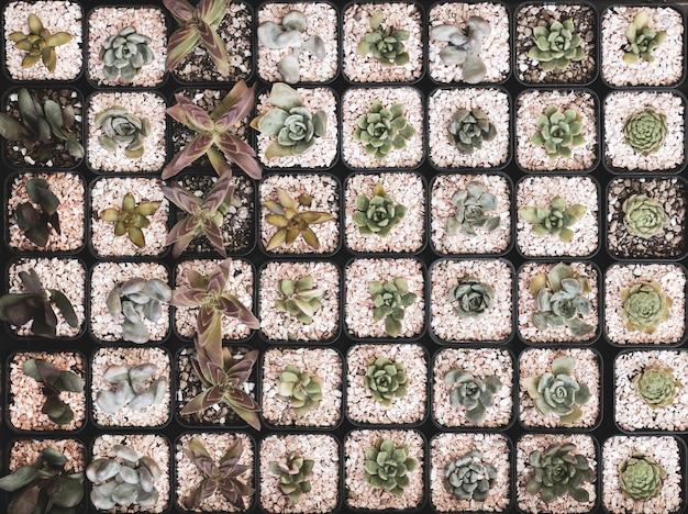 Угол обзора сверху различных маленьких кактусов в горшочках. Premium Фотографии