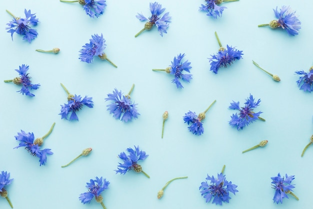 Top view arrangement of cornflowers
