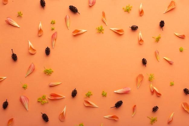 Disposizione vista dall'alto di petali di fiori Foto Gratuite