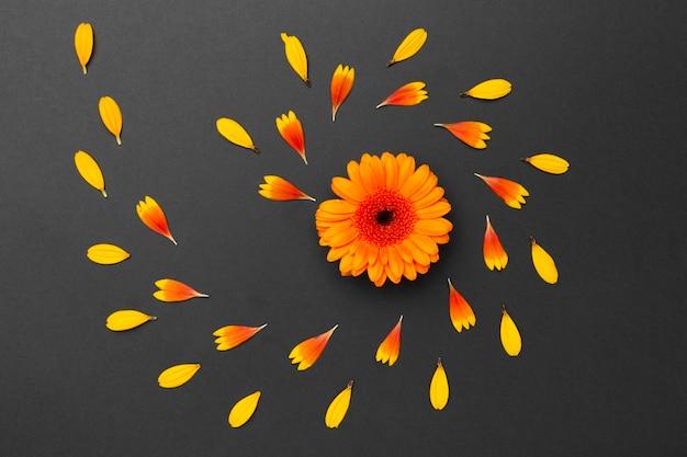 Disposizione dei fiori vista dall'alto