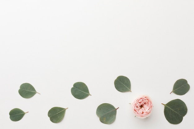 Top view arrangement of green leaves and rose copy space