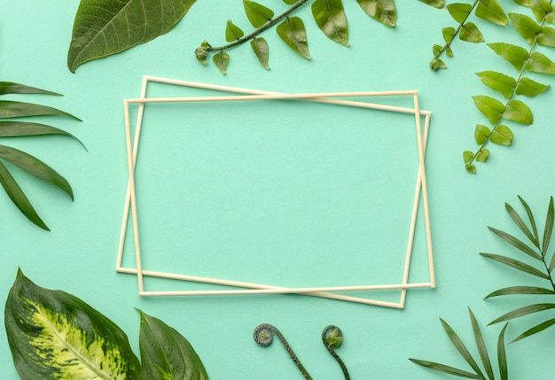 Top view arrangement of green leaves with empty frames