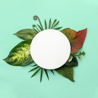 Top view arrangement of leaves with round object