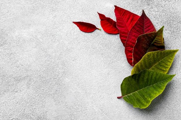 コピースペースとカラフルな葉の上面図の配置