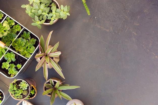 Вид сверху расположение различных растений с копией пространства