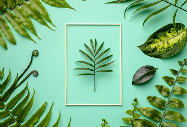 空のフレームと緑の葉の上面図の配置