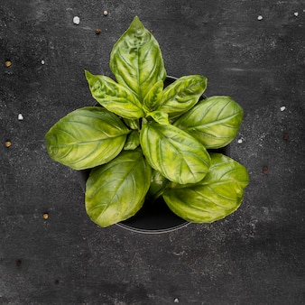 Расположение вида сверху питательного растения в миске