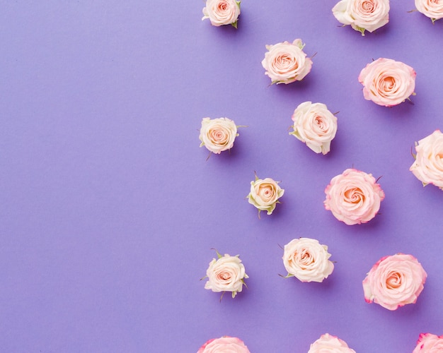 Top view arrangement of roses on violet copy space background