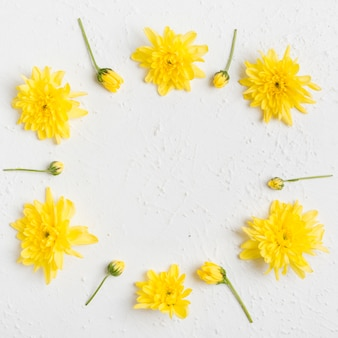 Top view of arrangement of spring daisies