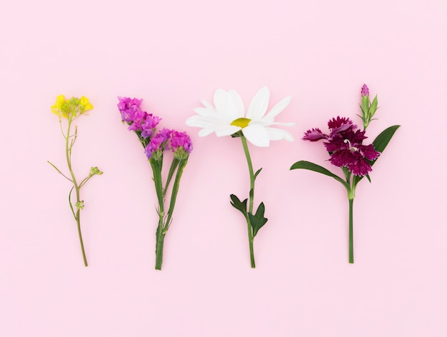 Top view arrangement with different flowers