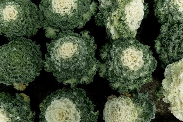 Top view arrangement with green plants