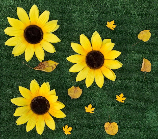 Top view arrangement with sunflowers on green background