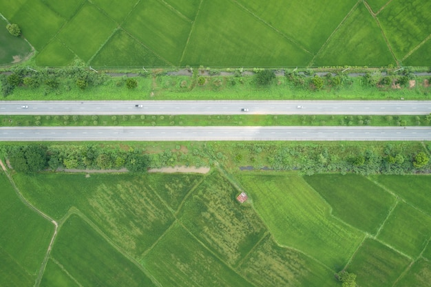 Top view asphalt road in the middle of green young rice fields