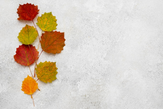 Top view of assortment of autumn leaves with copy space